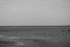 (Sofa Orellano) Tags: ocean chile sunset sea sky bw bird byn water argentina birds animal animals 35mm lumix grey lights movement rocks mine flickr zoom windy aves panasonic monocromatic animales catchy oceano inmensidad monocromatico vsco instagram