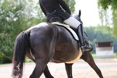 IMG_1892 (dreiwn) Tags: horse pony horseshow pferde pferd equestrian horseback reiten horseriding showjumping dressage reitturnier dressur reitsport dressyr ilsfeld dressuur ridingclub junioren ridingarena pferdesport springreiten reitplatz reitverein dressurreiten dressurpferd dressurprfung tamronsp70200f28divcusd jugentturnier