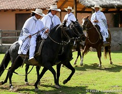 Peruvian Paso Horse (lugi_ch) Tags: travel people peru inca cuzco cusco sacredvalley urubamba nationalgeographic quechua solyluna lindbladexpeditions urubambavalley wayraranch
