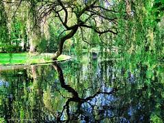Lush greenery in citypark Lier (jackfre2) Tags: trees green water pond belgium ducks greenery lush citypark lier lushgreenery