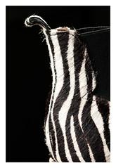 My favorite boots.... (objet introuvable) Tags: blackandwhite macro monochrome boots noiretblanc stripes nb objet macromondays