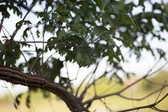 COD Hosts Free Prairie Tour 2016 6 (COD Newsroom) Tags: plants usa college nature campus illinois education university wildlife glenellyn prairie cod biology tallgrass tallgrassprairie collegeofdupage prairierestoration nativeillinoisplants