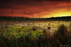 Sunset OnThe Swamp (slava_kushvalieva) Tags: trees sunset lake ontario green nature water reeds landscape swamp brook lilypads brucepeninsula owensound paulmurphy bullrushes wiarton deadtrees brucecounty otherkeywords gleasonbrook