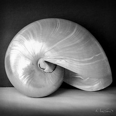 Nautilus (Wes Pettus) Tags: 120 film shell stillife bnw nautilus hasselblad500cm zeissmakroplanar120mmf4