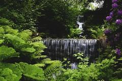 Rottneros park (anek07) Tags: park summer green wonderful waterfall nikon rhododendron lovely leavs rottneros annaekman