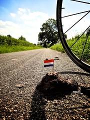 Vlag op een drol (ednl) Tags: summer sun netherlands bicycle wheel june juni flag nederland zomer poop cyclepath muck zon droppings poep manure dung 2012 bicyclewheel drol fietspad excrement vlag campagnolo wiel dutchflag mest haastrecht jaagpad nederlandsevlag wielrenfiets fietswiel cocktailprikker goejanverwelle sonywx1