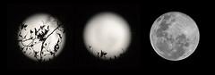 Hasta que subi la luna... (Chechi Pe) Tags: life sky moon art wow photography photo amazing still nikon triptych dof photos bokeh creative images luna cielo tres nikkor triptico triptyches