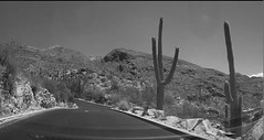 desert (jsmithington) Tags: streetphotography streetscene street blackandwhite tucson arizona candid
