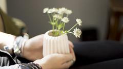 Glckstage (carla_hauptmann) Tags: travel flowers summer caf germany happy deutschland 50mm sommer sony blumen journey bremen reise ontour a77 glcklich f17
