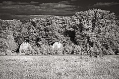 Twin Barns 3 (mjardeen) Tags: trees blackandwhite bw white black clouds contrast ir conversion g sony barns delta infrared converted fe nisqually 70200mm oss on1 4 lifepixel on1effects 702nm billyfrankjrwildliferefuge sonyfe70200mm4goss