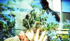 Double Exposure on Alex (Life Prowler) Tags: lomography doubleexposure multipleexposure holga135