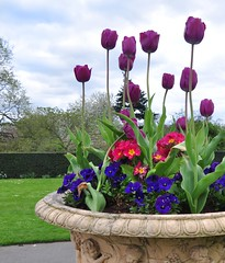 A Lovely Vase of Flowers! (Joe CWS) Tags: flowers kewgardens london outside richmond pot vase flowerpot colourfulflowers colorfulflowers colourulflowers