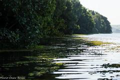 DSC01960 (Mario C Bucci) Tags: verde do eduardo gara tuiuiu dinan bigua banhado rato anhambi tanqu tanquan