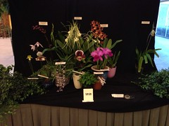 Plants from Anne (Men In Black) Tags: flowers plants orchids uploaded:by=flickrmobile flickriosapp:filter=nofilter