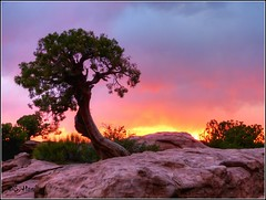 Juniper Tree at Sunset (Suzanham) Tags: sunset west landscape utah desert canyonlands western moab juniper thegalaxy