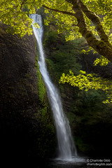 Horsetail Falls, Columbia Gorge, Oregon (Charlotte Hamilton Gibb) Tags: water oregon river portland waterfall columbia falls foliage gorge