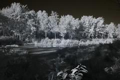 IMG_2355 (Dan Correia) Tags: amherst swamp shadows infrared canonef35mmf2 15fav topv111 topv333 topv555