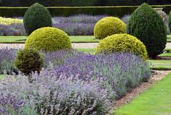 DSC_0087 (grumpyward) Tags: uk garden box lavender walledgarden beltonhouse nikond3200