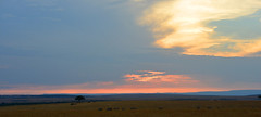DSC_7917 (H Sinica) Tags: sunset sunrise safari mara masai savanna maasaimara 肯亞 肯尼亚 马赛马拉