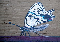 The Alchemy of Ben Ali (vpickering) Tags: butterfly mural butterflies murals insects u ust ustreet thealchemyofbenali