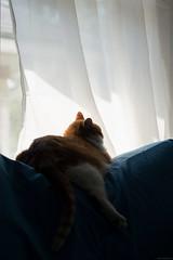 NCB_0051.jpg (Our Poopy Pants) Tags: hairy pet cats cat fur furry kat feline chat kitty whiskers gato kitties meow katze paws puss kot gat koka kass katt kato kissa maka paka  furballs katu conmo
