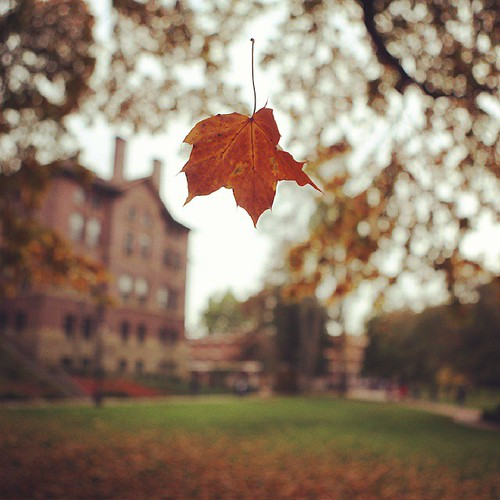 A leaf, suspended.   Happy Monday, Vikings! It's another beautiful day on campus.