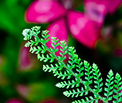 Fern's in Autumn are nice. (Omygodtom) Tags: autumn red fern green fall nature nikon dof tamron90mm d7000