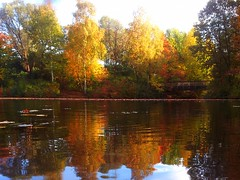 A fall to fall for (Cristian Ştefănescu) Tags: autumn lake reflection fall water leaves forest germany deutschland fire leaf wasser herbst wald bäume baum waterscape hennef