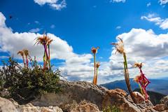 (A Satchel Full Of Numbers) Tags: old silver mexico san desert pueblo mining plata desierto luis peyote historia magico realdecatorce potosi huicholes mineria