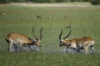 Botswana Okavango Delta Photo Safari 27