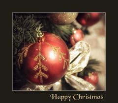 Happy Christmas 2013 (in eva vae) Tags: christmas friends macro tree closeup canon balls inevavae
