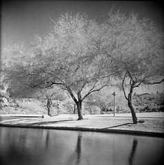 Rollei IR400 Test Roll (magnetic_red) Tags: tree tlr film water mediumformat landscape ir grain surreal infrared grainy yashicad selfdeveloped caffenol rolleiir400 semistanddeveloping