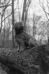 Have a seat (Carsten aus Bonn) Tags: dog olympus hund hp5 ilford trip35