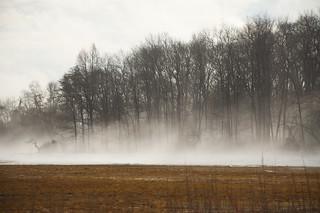fog at Crane's