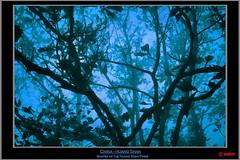 China - Huang Shan (pharoahsax) Tags: world china old blue mountain get heritage colors yellow fog pine canon vintage nebel alt retro unesco sl list bonsai duotone uni shan blau kiefer huangshan huang anhui pinus 40d canon40d sagelight sagelighteditor pmbvw hwangshanensis worldgetcolors huangshanberg