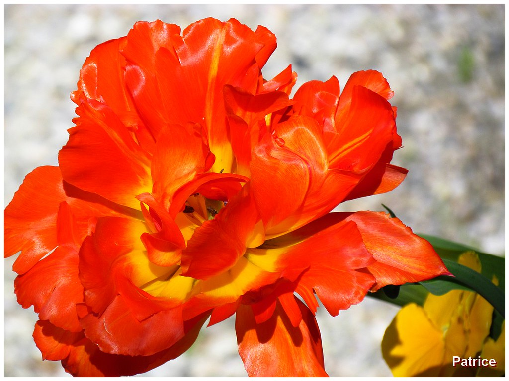 The World S Most Recently Posted Photos Of Narcisses And Rouge