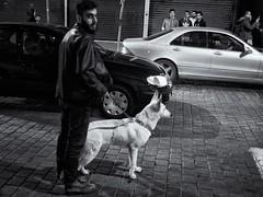 Beirut Impressions # 2 (achimvoss) Tags: lebanon dog men middleeast blackandwhile beirut hamra ruehamara achimvoss