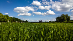 WP_20140503_15_54_21_Raw__highres (rosstek) Tags: green nature grass clouds landscape nokia raw 1020 hilversum tvtower televisiontower natuurmonumenten carlzeiss dng lumia sgraveland boekesteyn pureview nokialumia1020