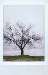 Chasing the Reasons. (H o l l y.) Tags: winter sky lake snow cold color tree film nature water clouds landscape polaroid cool alone fuji reservoir lonely instax