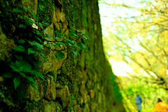 Growing (joaop_21) Tags: park travel family plant planta portugal nature wall walking nikon rocks colorful afternoon bokeh walk natureza visit porto growing 1855mm nikkor oporto distinct serralves d3200