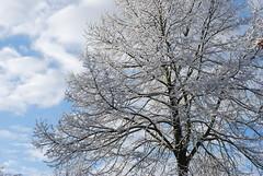 Ach, Vater, der die ganze Welt (amras_de) Tags: schnee winter snow vinter hiver nieve sneeuw tr boom neve rbol invierno neige lumi inverno talvi zima sn baum nix kar neu sniegas sn sne snijeg snjr vetur talv sneh sneg nivi hivern kis nego snaw sniegs wanter hiems iarna zapada h sneeu stablo negu tl snh elur ziema snieg iema nieu vintro sneachta hibierno geimhreadh schni ivrn mmernu nu