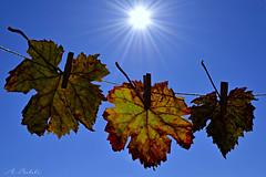 ...al sole! (A.Baldi) Tags: foglie nikon cielo sole