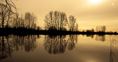 perfectly still - Explored 02.07.2015 - thank you!! (rockinmonique) Tags: trees light lake reflection silhouette canon gold golden peaceful sitll moniquew