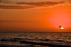 Sunrise on Sanibel Island (AZSunsets) Tags: bird gulfofmexico sunrise island florida sanibel inspiring newday justclouds