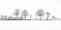 Winter-Trees- (petefoto) Tags: trees winter snow cold silhouette suffolk frost yoxford nikond810 bwpolariser lee09sgrad