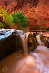 Gulch Oasis (wuman88) Tags: coyote autumn southwest utah waterfall sandstone desert canyon gulch