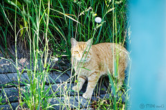 Today's Cat@2016-05-12 (masatsu) Tags: cat pentax catspotting mx1 thebiggestgroupwithonlycats