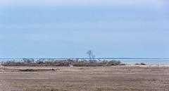 _DSC0544 (johnjmurphyiii) Tags: statepark usa beach spring connecticut madison longislandsound polarization hammonasset polarizedfilter 06443 tamron18270 johnjmurphyiii originalnef