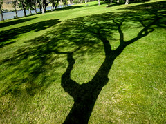 Tree-mendous Shadow (maytag97) Tags: park shadow tree green grass contrast landscape lawn greengrass maytag97
