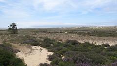 Ria Formosa, Faro, Algarve, Portugal - May 2016 (Keith.William.Rapley) Tags: portugal faro nationalpark algarve riaformosa dunesystem keithwilliamrapley